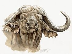 Cape Buffalo Watercolor