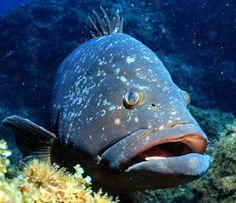 peixes polinesia francesa - Pesquisa Google