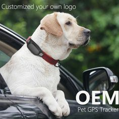78.99$  Watch here - http://ai39q.worlditems.win/all/product.php?id=32571260859 - free IOS  App and website service Real Time GPS Tracker for Pets Dogs Cats GPS Tracking device ET20