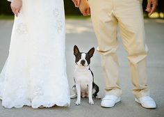 #wedding pic with our Schnauzer