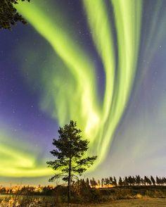 Northern Lights, (Aurora Borealis), Umeå Sweden.