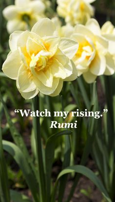 """""""Watch my rising.""""  Rumi -- Explore quotes on discovering the sacred in life at http://www.examiner.com/article/learning-to-find-the-sacred-life"""