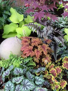Coral Bells and Hybrids | Fine Gardening
