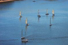 Het Lipno meer is een geliefd meer bij de watersporter. Je kan er zwemmen, zeilen, vissen en roeibootjes huren. Photo: Libor Svacek ©CzechTourism www.czechtourism.com Animals, Animales, Animaux, Animal, Animais