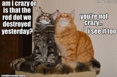 Funny cats pic with joke caption. For more funny joke pics and great humor visit www. Funny Animal Memes, Cat Memes, Funny Animals, Cute Animals, Cats Humor, Animal Humor, Funny Memes, Funny Horses, Crazy Cat Lady