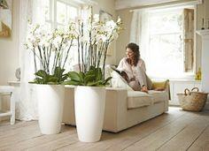 roomdevider met planten
