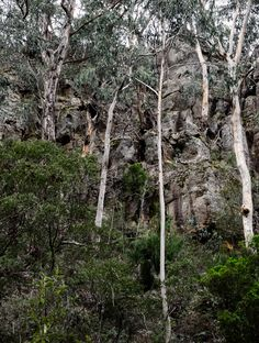 Reach (2016).  The sides of the gorge are high and it is quite narrow, so the trees have to reach for the sky to gain their light.  Ironbark Gorge, Aireys Inlet, Vic. Australia. © Gary Light. Creative Commons: (CC BY-NC-ND 4.0).  #photography #landscape #victoria #australia #walking #nature #aireysinlet #sony #a7ii #ironbarkgorge