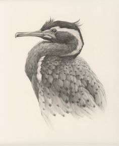 Self-employed artist Vanessa Foley has created the collection of awesome realistic sketches of birds below. She is currently based in Newcastle, England and her work has been featured in galleries in America, New Zealand and the UK. Realistic Animal Drawings, Realistic Sketch, Pencil Drawings Of Animals, Amazing Drawings, Animal Sketches, Bird Drawings, Ink Pen Drawings, Pencil Drawing Inspiration, Sketchbook Inspiration
