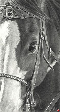 Boss by Mary Ross Buchholz, Graphite & Charcoal, x Horse Drawings, Pencil Art Drawings, Animal Drawings, Clydesdale, Horse Artwork, Horse Paintings, Pastel Paintings, Horse Sketch, Art Drawings Beautiful