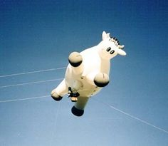 Have you ever seen a cow fly! Throwback to 2013 and this smiling, flying cow #ThrowbackThursday