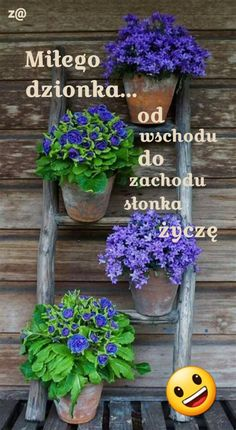 Planter Pots, Gardening, Good Morning, Lawn And Garden, Horticulture