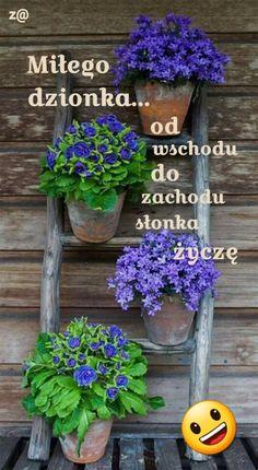 Planter Pots, Gardening, Garten, Lawn And Garden, Garden, Square Foot Gardening, Garden Care, Horticulture