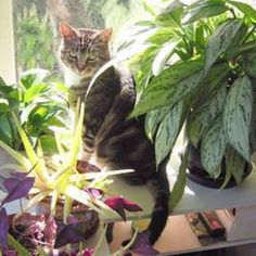 Plants and Foods that are Poisonous to Cats | Catster