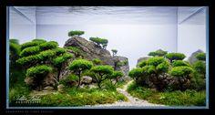 Betta Splendens: IAPLC 2014: classement, TOP100 aquariums