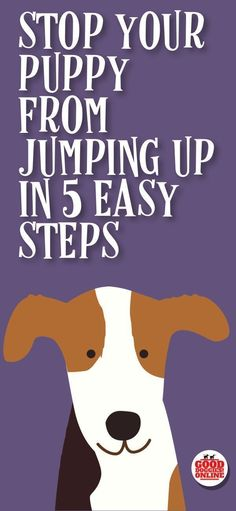 The puppy training tips are here to help you stop your puppy from jumping up, whether it's jumping on people, jumping on the couch, the bed or other furniture, or jumping up on walks, these dog training tips will help you with your new puppy. #puppy #pupp