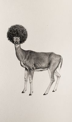 Artist Mateo Pizarro's drawings are based on historical descriptions of animals - for the book 'Bestiary of Improbable Animals'.