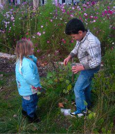 Zelf zaden oogsten is kinderspel