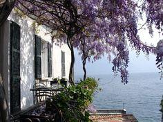 Lake Como wisteria