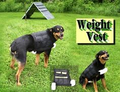 LaGuardVest.com Vests for your dog that are a life vest, weight ...