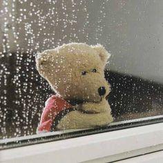 Teddy looking out at the rain Tatty Teddy, Teddy Bear Day, Cute Teddy Bears, Love Bear, Big Bear, Photo Ours, Ours Paddington, Teddy Bear Pictures, Bear Girl