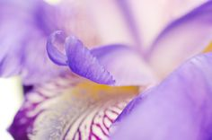 Soft Focus Iris Petals by PI Photography and Fine Art - Delaware Photographer on 500px