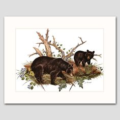"Black Bear Cub Art w/Mat (Animal Wall Decor, Rustic Cabin Artwork) ""Spring Forage"" -- Vintage Matted Print. Vintage Bear Art Print w/Mat , Wildlife Wall Decor, Animal Artwork -- Unframed Matted Print One in a beautiful series of 30 woodland animal and bird illustrations for home, office or nursery One ""Black Bears, Summer"" vintage, mint-condition James Lockhart print (attached to a new, off-white mat) Finely detailed 1970s artwork: Bear family, summertime forage Published 35 years ago on..."