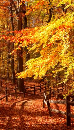 Autumn trail through the Thain Family Forest in New York City • photo: Ivo M. Vermeulen on New York Botanical Garden