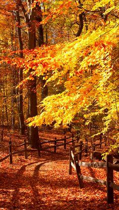 Autumn trail through the Thain Family Forest in New York City • photo: Ivo M. Vermeulen on New York Botanical Garden