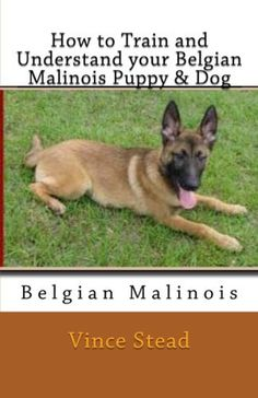 How to Train and Understand your Belgian Malinois Puppy  Dog by Vince Stead. $5.06 www.ilovemalinois.com