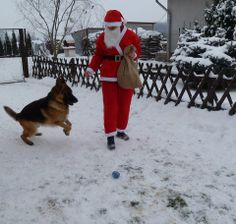 So excited to see Santa!!  Dog lovers will appreciate this.