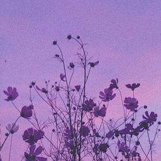 Violet Aesthetic, Dark Purple Aesthetic, Lavender Aesthetic, Aesthetic Colors, Aesthetic Images, Aesthetic Backgrounds, Aesthetic Anime, Aesthetic Wallpapers, Nature Aesthetic