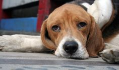 Gas chambers for animals are a torturous and inhumane practice. Demand that officials prohibit this barbaric form of euthanasia.
