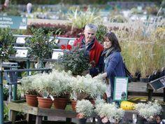 The 50 Best garden centres in Britain