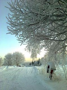 Winter Dawn __________________________________ #Winter #Jahreszeit #Season