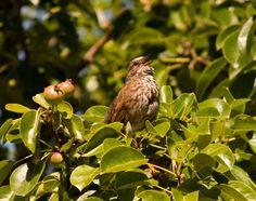 Sparrow bird photo bird picture nature 8 x 10 by Turtlesandpeace