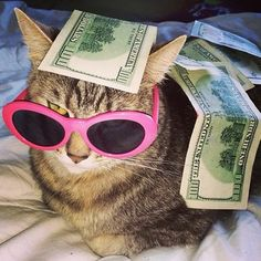Quotes courtesy of the Kardashians, kittens courtesy of Cashcats. Cute Baby Cats, Cute Little Animals, Cute Funny Animals, Funny Cats, Cute Animal Photos, Funny Animal Pictures, Meme Chat, Cat Icon, Cute Cat Wallpaper