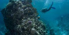 Gulf of Aqaba, Jordan - A diver explores the Gulf of Aqaba's warm waters