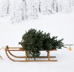 """Thank you for all your contributions to this board """"TREES the sharing board"""" this year & HAPPY CHRISTMAS from Merrin Joinery."""