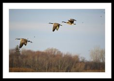 Flight Of Spring Framed Print By Bonfire #Photography