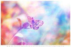 Butterfly Love (: