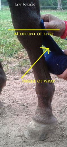 Trinity Appaloosa Farm: Proper leg wrapping. Why is something so easy, so hard?