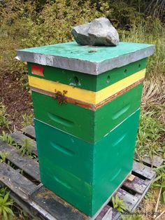 If your friendly springtime honeybees have turned mean, this might be why. #honeybees http://mudsongs.org/what-makes-friendly-springtime-honey-bees-turn-mean/