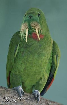 """Walrus + Parrot = WALROT (""""Animal Crossbreed"""" Worth1000 Contest Entry)"""