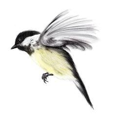 Flying Chickadee Tattoo