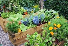 Some plants will deter insects in the vegetable garden. This is one form of companion planting. Companion planting--growing plants singly or together--to Vegetable Garden For Beginners, Backyard Vegetable Gardens, Gardening For Beginners, Gardening Tips, Planting Vegetables, Growing Vegetables, Container Vegetables, Growing Tomatoes, Companion Planting Guide