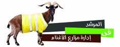 المرشد فى ادارة مزارع الاغنام | mazra3ty | مزرعتي