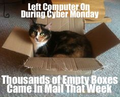 Happy Cyber Monday from the cat!