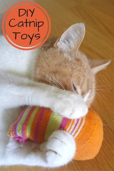 A quick and easy tutorial on how to make homemade Catnip Toys using unmatched socks and other easy supplies. The fastest DIY project ever. Your kitties will have fun playing with them and watching them is just as fun for you! #MyCatMyMuse from @PetSmart (ad)