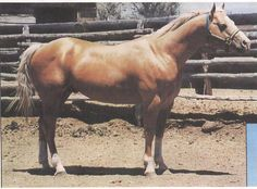 Skip N Union; 1990; Palomino stallion; (Skippers Ring x Skip N Donna); Breeder: H. J. Wiescamp; another example of progeny from Sagey line. Sold for 80,000 at Wiescamps estate dispersal sale in 1998. #1 stallion still living used by Wiescamp before he passed away. Owned by Frank and Valerie Fleckner of Port Orchard, WA.