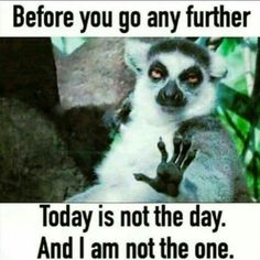 Yup. There are days when that if me.                                                                                                                                                                                 More  #Etsy #Danahm1975 #Jewelry Hilarious Pictures, Hilarious Animals, Cute Animals, Funniest Animals, Funny Animal Pictures, Party Animals, Funny Images, Sarcastic Images, Sarcastic Work Humor